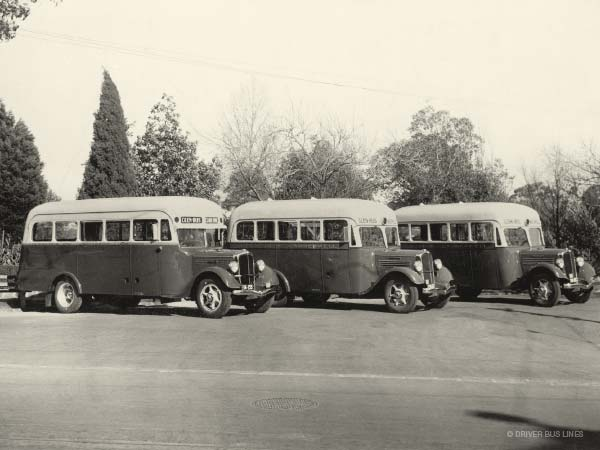 Vintage photo of 3x Driver Federal busses lined up in a row, circa 1937 at Camberwell Town Hall gardens