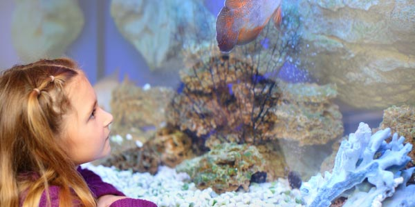 Girl on school excursion to aquarium looking at tropical fish